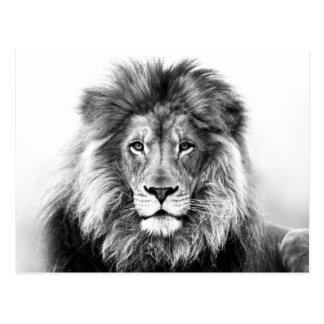 Carte Postale Conception de lion
