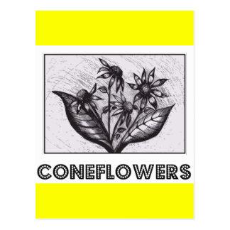Carte Postale Coneflowers