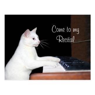 Carte Postale Considérant de piano de chat