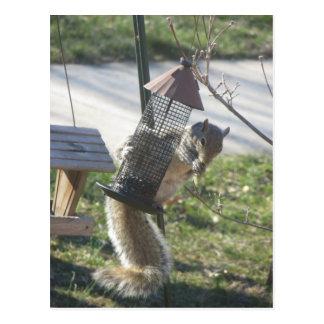 Carte Postale Consommation de l'écureuil