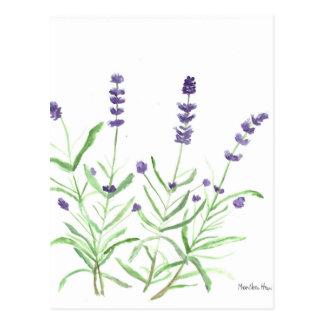 Carte Postale Copie botanique d'herbe de lavande