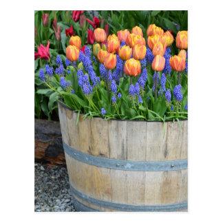 Carte Postale Copie orange de planteur de tulipe de ressort