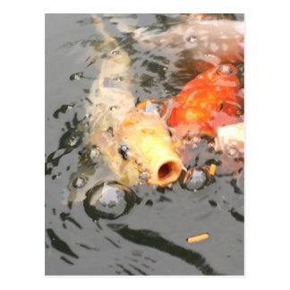 Carte Postale Copies de poissons de Koi