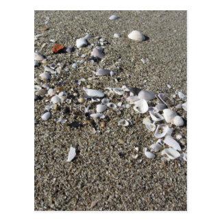 Carte Postale Coquillages sur le sable. Arrière - plan de plage
