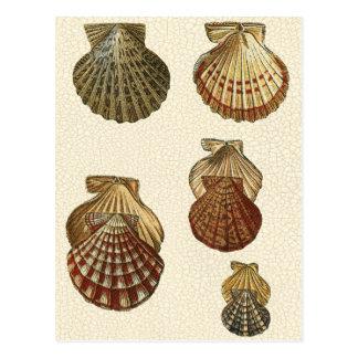 Carte Postale Coquilles antiques crépitées