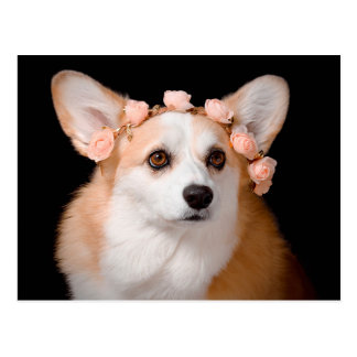 Carte Postale Corgi avec des fleurs dans ses cheveux