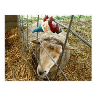 Carte Postale Cornélius et les moutons