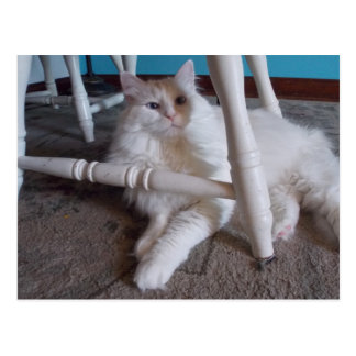Carte postale corrompue de chat de Cutey