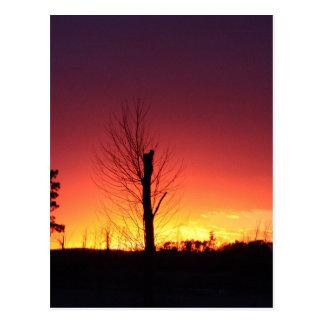Carte Postale Coucher du soleil orange