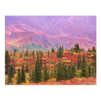 Carte Postale Couleur de chute en parc national de Denali