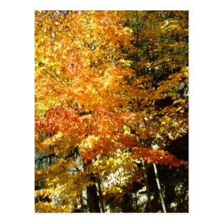 Carte Postale couleurs de chute