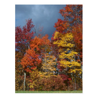 Carte Postale Couleurs de chute dans Blue Ridge Mountains