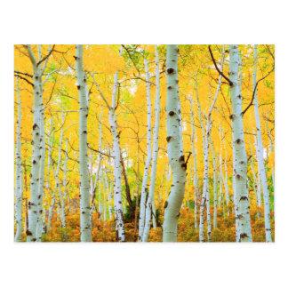 Carte Postale Couleurs de chute des arbres 1 d'Aspen