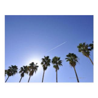 Carte Postale Courant de jet au-dessus des palmiers