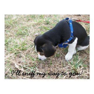 Carte Postale Courrier de beagle