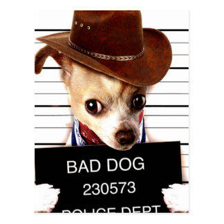 Carte Postale cowboy de chiwawa - chien de shérif