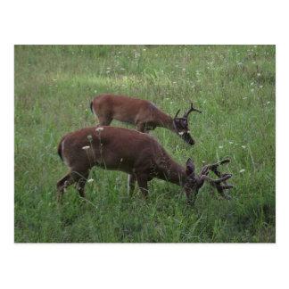 Carte Postale Crique de Cades : Parc national TN de Great Smoky