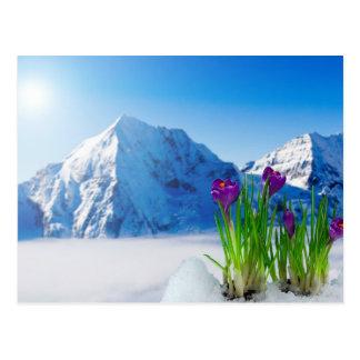 Carte Postale Crocus de ressort sur la montagne couronnée de