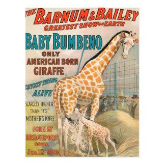 Carte Postale Cru : cirque Barnum et Bailey -