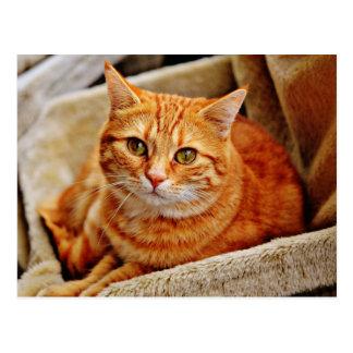 Carte Postale Cute Orange Cat