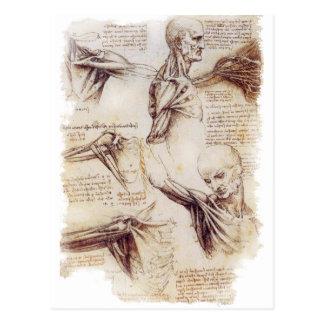Carte Postale da Vinci -- Croquis d'épaule