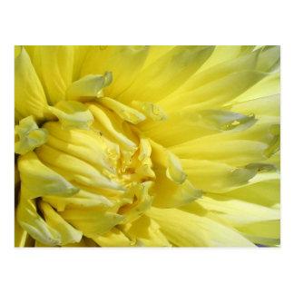 Carte Postale Dahlia lumineux et jaune citron