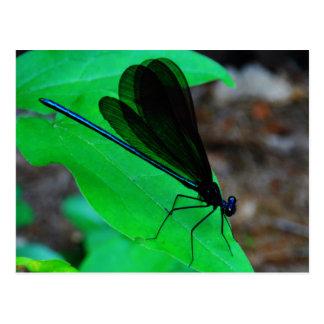 Carte Postale Damselfly bleu sur une feuille verte