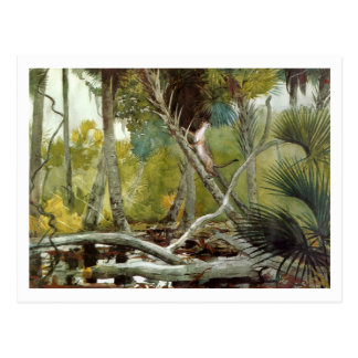 Carte Postale Dans la jungle, la Floride par Winslow Homer