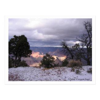 Carte postale d'arbres de canyon grand