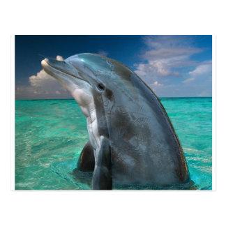 Carte Postale Dauphin en Bahamas