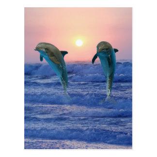 Carte Postale Dauphins de Bottlenose au lever de soleil