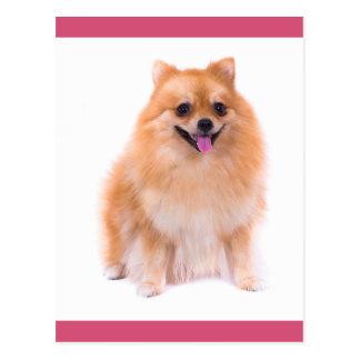 Carte postale de blanc de chiot de Pomeranian