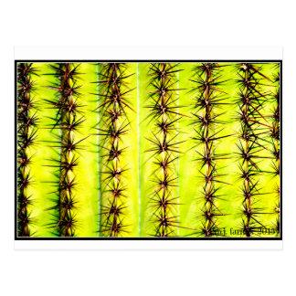 Carte postale de cactus de Saguaro