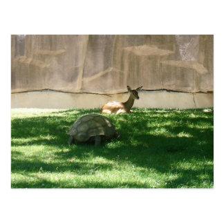 Carte postale de chasseur de tortue