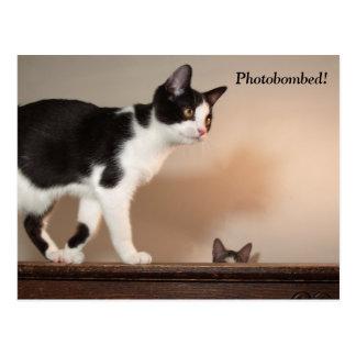 Carte postale de chat de Photobombed