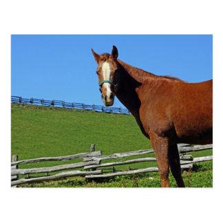 Carte postale de cheval