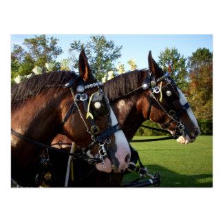 Carte postale de cheval de Clydesdale
