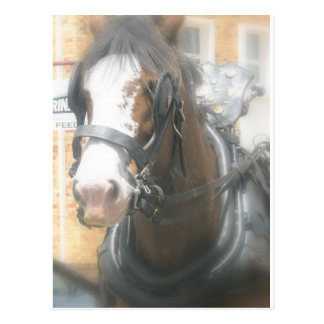 Carte postale de cheval de Clydesdale Brown