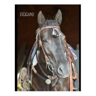 carte postale de cheval de la jument nommée Fargo