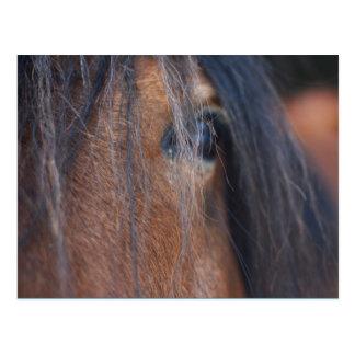 Carte postale de cheval de trait