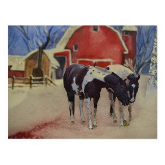 carte postale de cheval des pouliches, du Fargo et