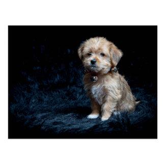 Carte postale de chiot de Yorkshire Terrier
