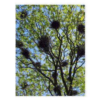 Carte postale de colonie de héron de grand bleu