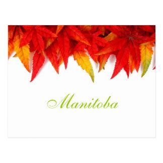 Carte postale de feuille d'automne de Manitoba
