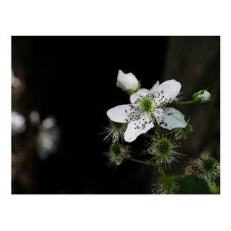 Carte postale de fleur sauvage de ronce bleue
