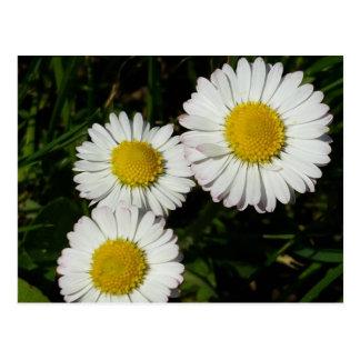 Carte postale de fleurs sauvages