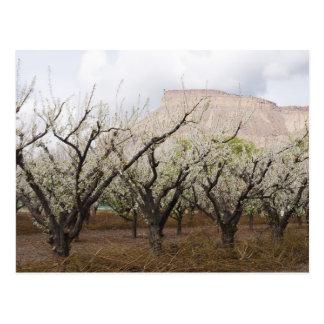 Carte postale de floraison de verger de prune de