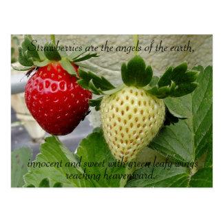 Carte postale de fraises