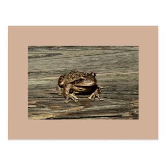 Carte postale de Froggy de sentiment
