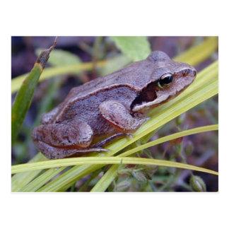 Carte postale de grenouille/crapaud